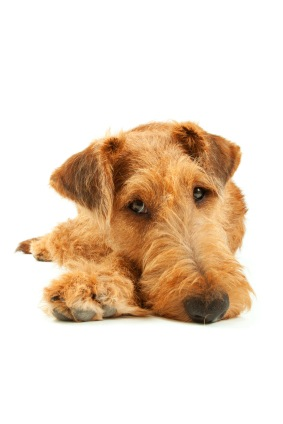 Pet Loss: One of Your Most Important Relationships Is Over